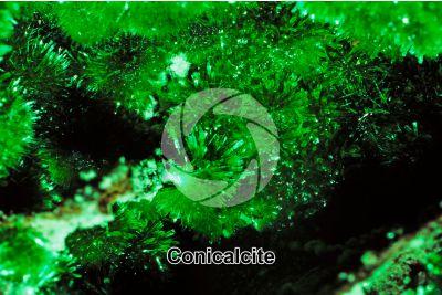 Conicalcite