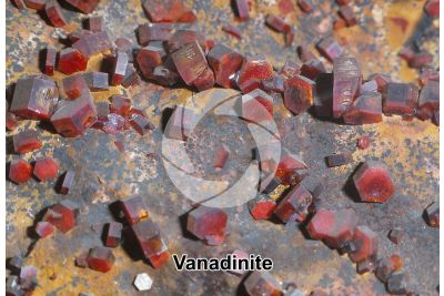 Vanadinite