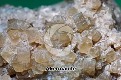 Akermanite