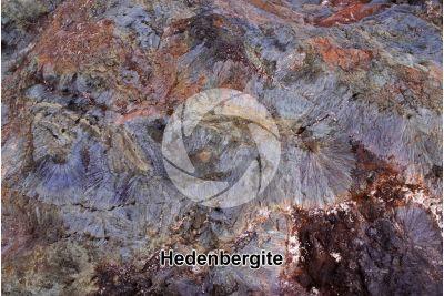 Hedenbergite. Elba. Tuscany. Italy