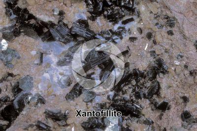 Xantofillite