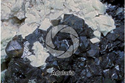 Adularia