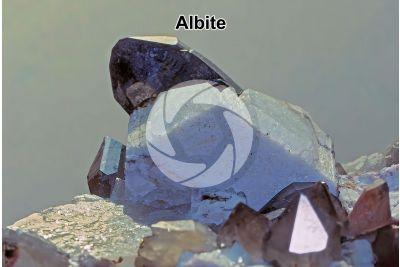 Albite