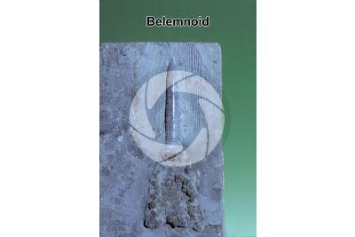 Belemnoidea. Belemnoid. Fossil. Jurassic