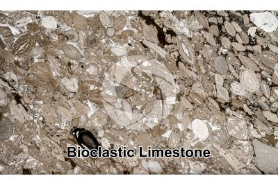 Bioclastic Limestone. Fossil. Thin section. 4X