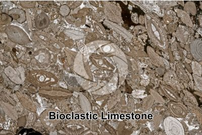 Bioclastic Limestone. Fossil. Thin section. 8X