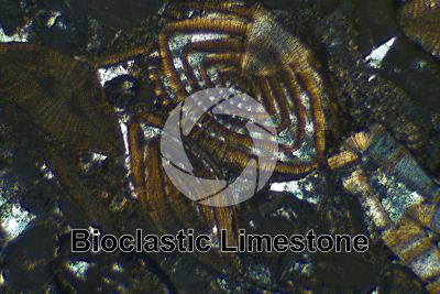 Bioclastic Limestone. Fossil. Thin section in cross polarized light. 32X