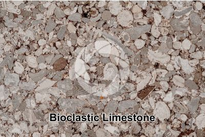 Bioclastic Limestone. Fossil. Thin section. 10X