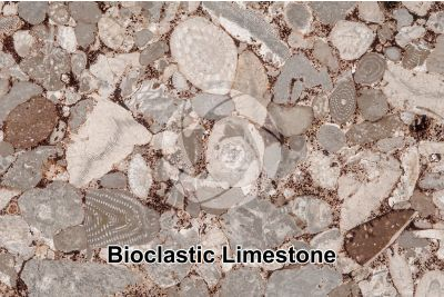 Bioclastic Limestone. Fossil. Thin section. 18X
