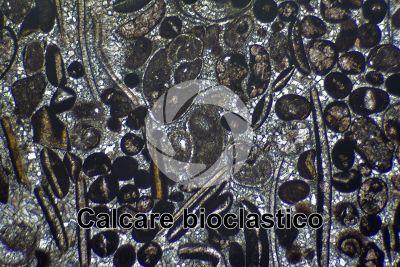Calcare bioclastico. Fossile. Sezione sottile in luce polarizzata. 32X