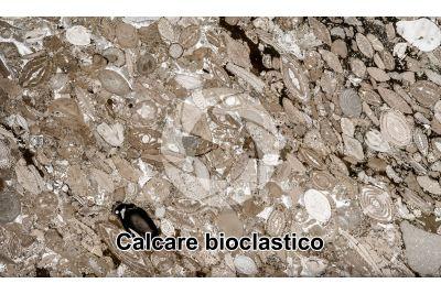 Calcare bioclastico. Fossile. Sezione sottile. 4X