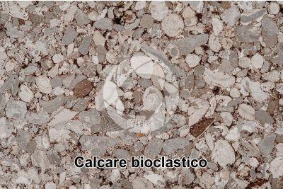 Calcare bioclastico. Fossile. Sezione sottile. 10X