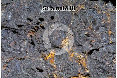 Stromatolite. Fossile. Permiano