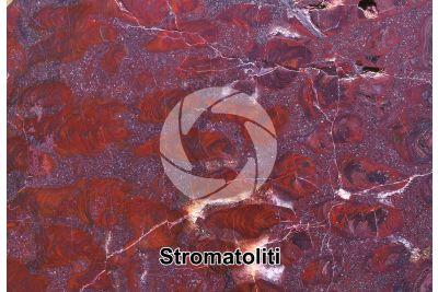 Stromatolite. Fossile. Precambriano